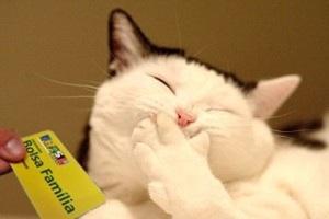 gato-recebe-bolsa-família